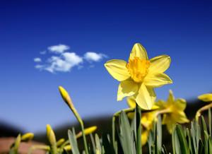 wiosna-tapeta1